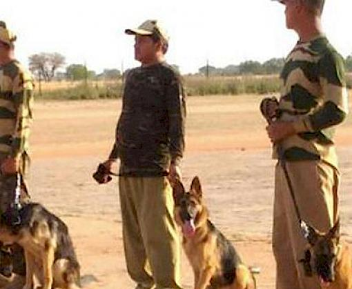 Wildlife sniffer dog training begins in Gwalior, TRAFFIC recruits another 12 dogs