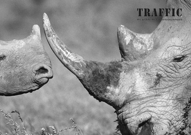 fighting the trade in rhino horn