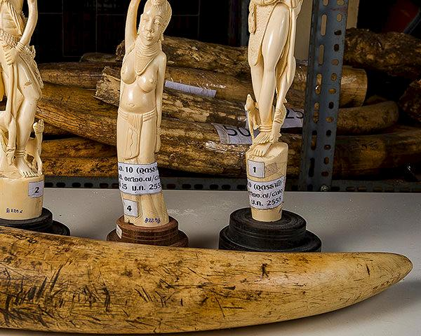 Seized ivory by the Department of National Parks, Bangkok © Ola Jennersten / WWF-Sweden