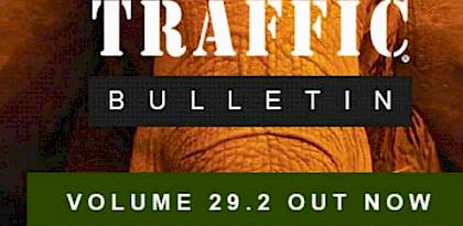 Helmeted Hornbills, pangolins in Malaysia, online trade in the Philippines & more in the latest TRAFFIC Bulletin