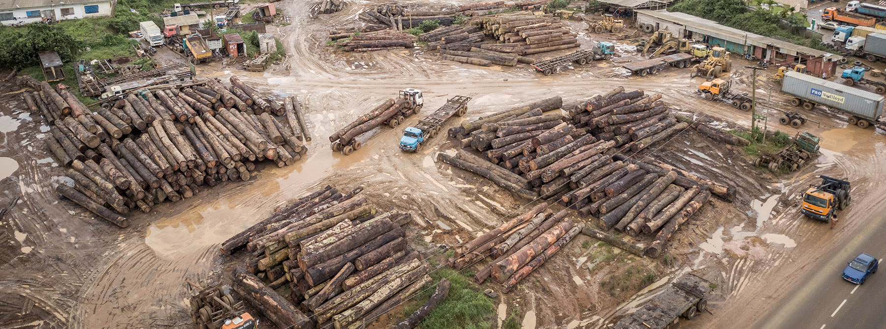 Log stockpile along the main road into Douala, Cameroon © Andrew Walmsley / TRAFFIC