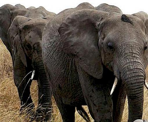 System Error, Reboot Required: Review of online ivory trade in Japan