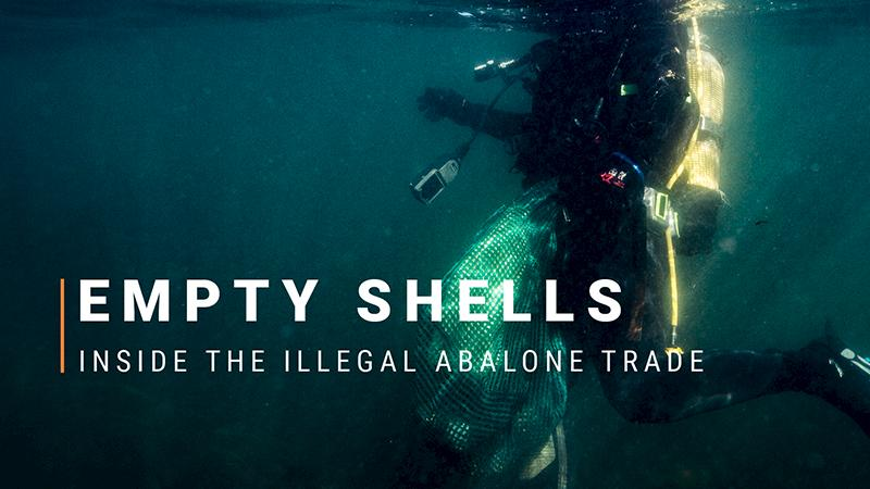 Guns, gangs, and drugs: a window into South Africa's illegal abalone trade