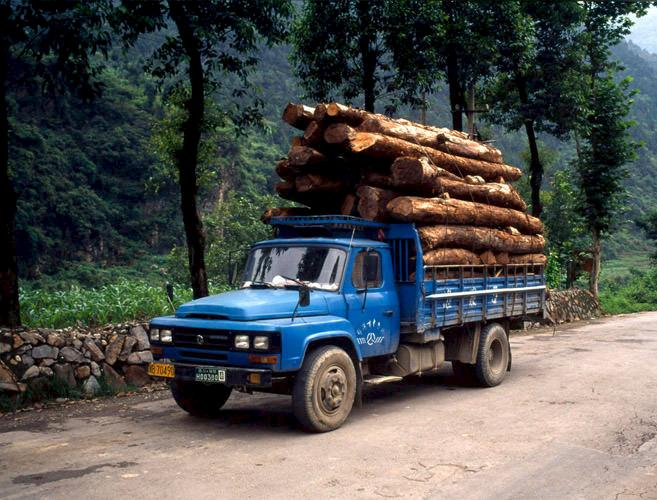 Logging trucks transporting timber from the last remaining forest in Sichuan, China © John E. Newby / WWF