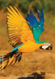 Bird S Eye View Lessons From 50 Years Of Bird Trade Regulation