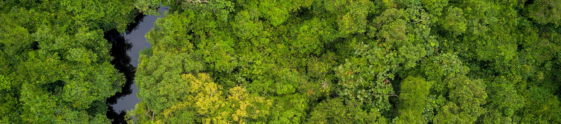 Aerial view of Salonga National Park, Democratic Republic of Congo © Thomas Nicolon / WWF DRC