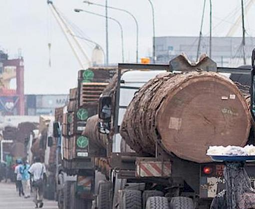 TRAFFIC project to equip stakeholders with new tools to ensure sustainable timber trade