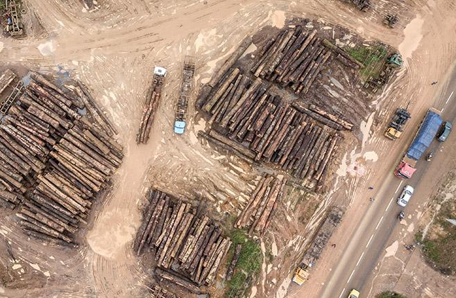 Reducing illegal timber exports from Cameroon and Viet Nam