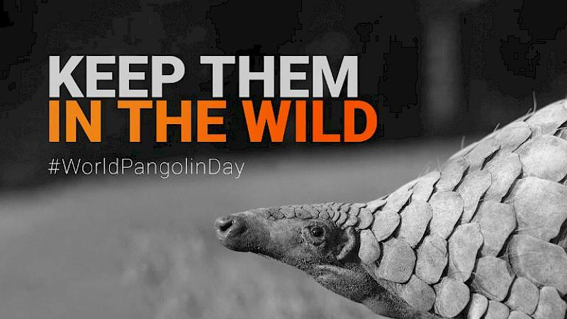 Keep them in the Wild: Working to save pangolins from poaching and illegal trade