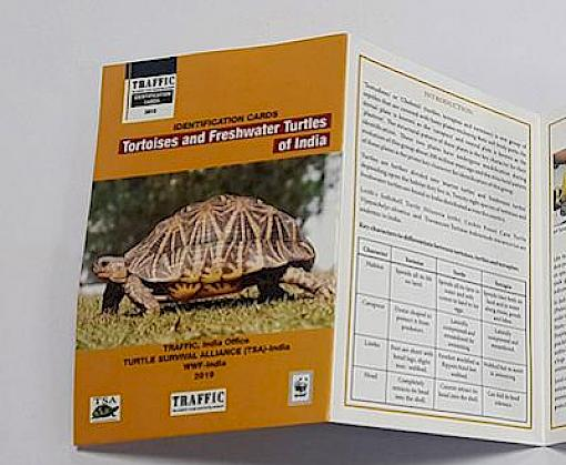New ID tools to help curb illegal trade of tortoises and freshwater turtles in India launched