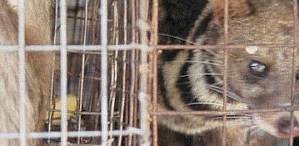 China imposes temporary ban on all wild animal trade over coronavirus fears