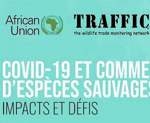 Joint African Union - TRAFFIC webinar on Wildlife Trade in Africa