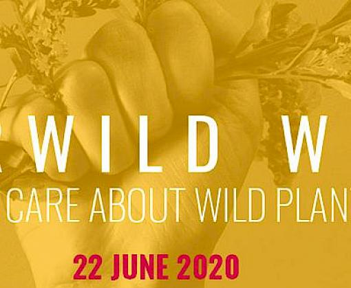 FairWild Week 2020: why wild plants matter more than ever