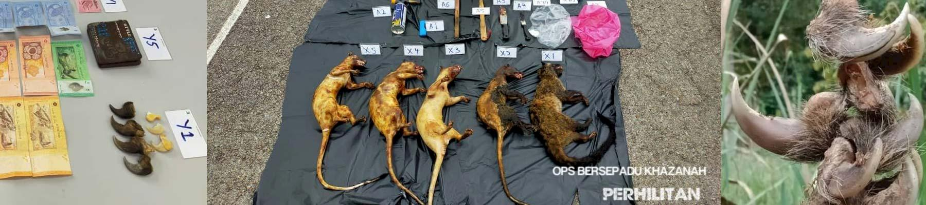 Some of the seized wildlife parts and assets  © Perhilitan