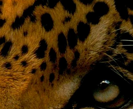 Brazil's widespread wildlife trafficking