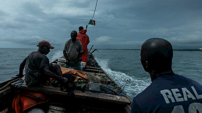 The story of the Republic of the Congo's artisanal shark trade