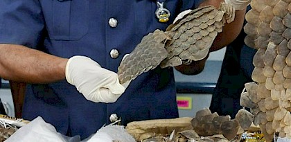 Malaysia seizes pangolins scales moving through mail centre