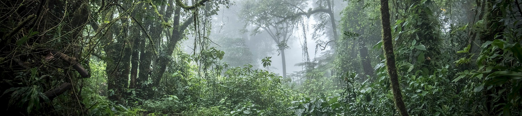 Forest at the base of Mount Cameroon © A. Walmsley / TRAFFIC
