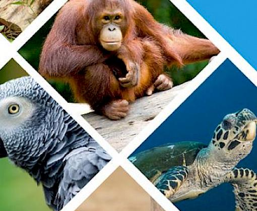 Digital course on preventing wildlife trafficking in the supply chain now available in multiple languages