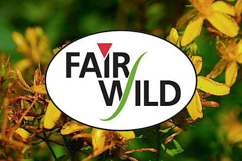 The FairWild Standard is an invaluable certification tool working towards sustainable wild harvesting of plants across the world. It ensures best practice frameworks are in place to avoid habitat loss or declines in biodiversity and helps harvester communities reap the rewards from sustainable wild collection.