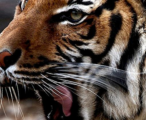 Golden Triangle under spotlight as illegal wildlife trade hub