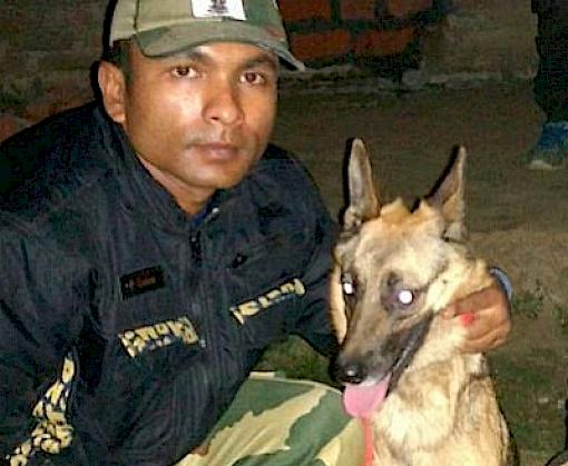 Wildlife sniffer dog helps apprehend poacher just a week after deployment