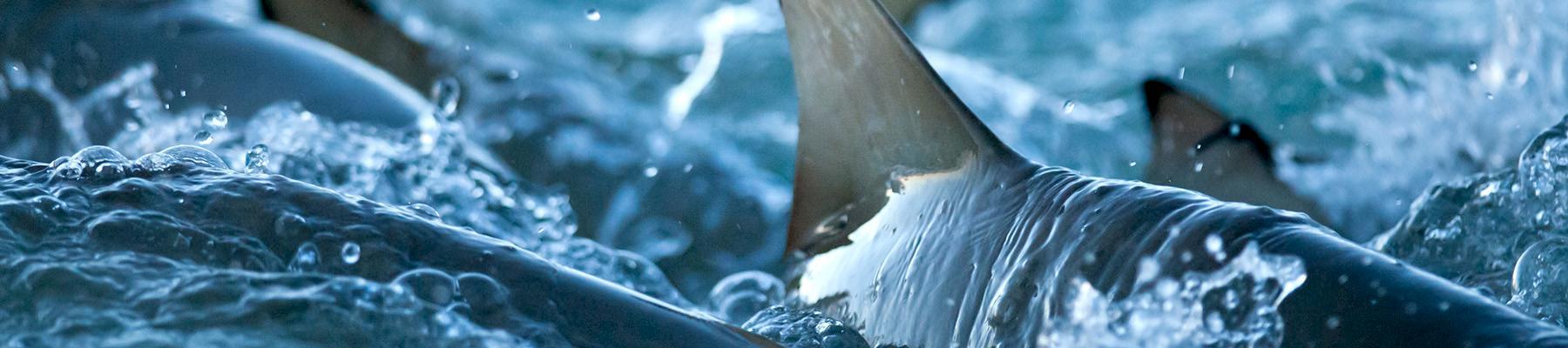 Shark trading system