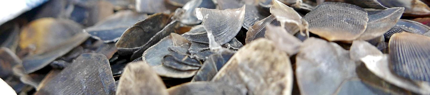 288kg of pangolin scales were seized at Kuala Lumpur airport © TRAFFIC