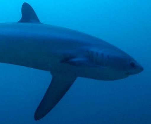 Workshop for southwest Indian Ocean sets stage for monitoring and conservation of sharks and rays