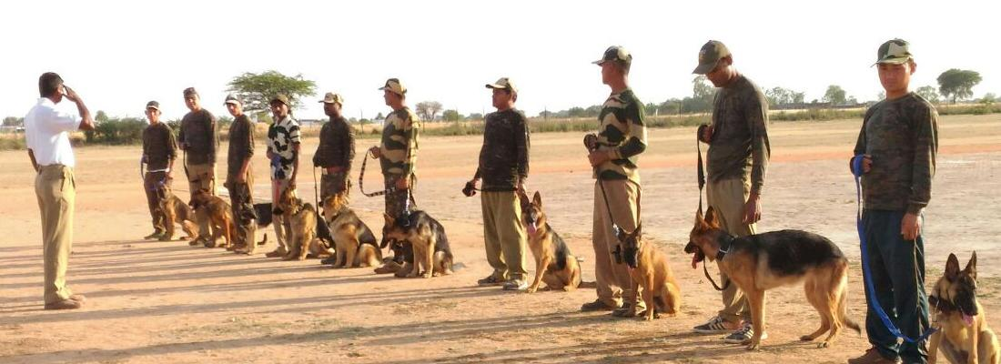 Trainee sinffer dogs and their handlers receive training on detecting wildlife products © TRAFFIC