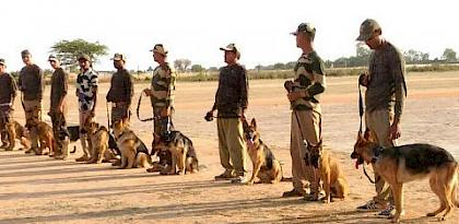 Adding teeth to law enforcement: 13 dog squads commence wildlife detection training