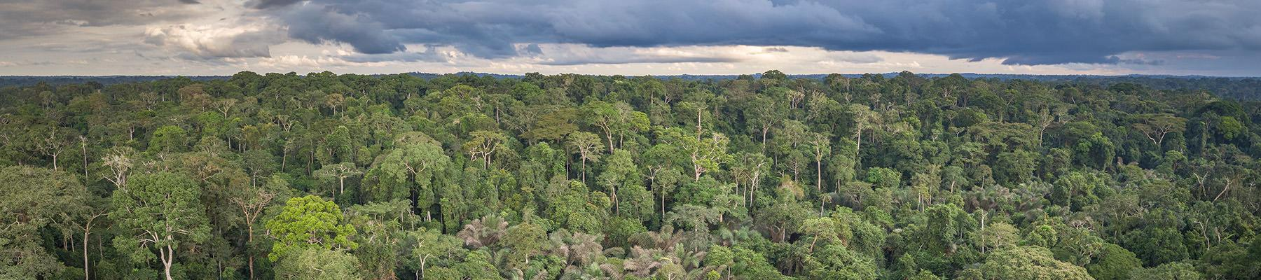Tropical forest in Dja National Park, Cameroon © A.Walmsley / TRAFFIC