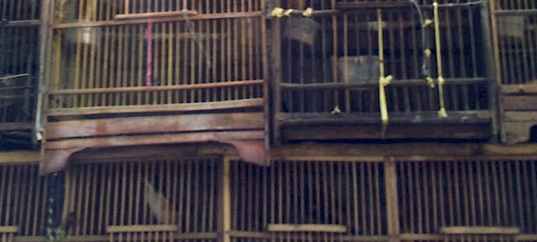 25++ Pasar hewan liar indonesia terbaru