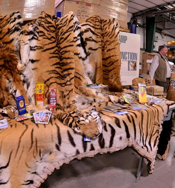 Tiger skins and assorted objects at the US Fish and Wildlife Service repository © TRAFFIC