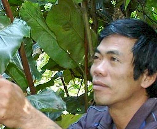 Wild plant harvesters gain insights from a successful co-operative model in Viet Nam