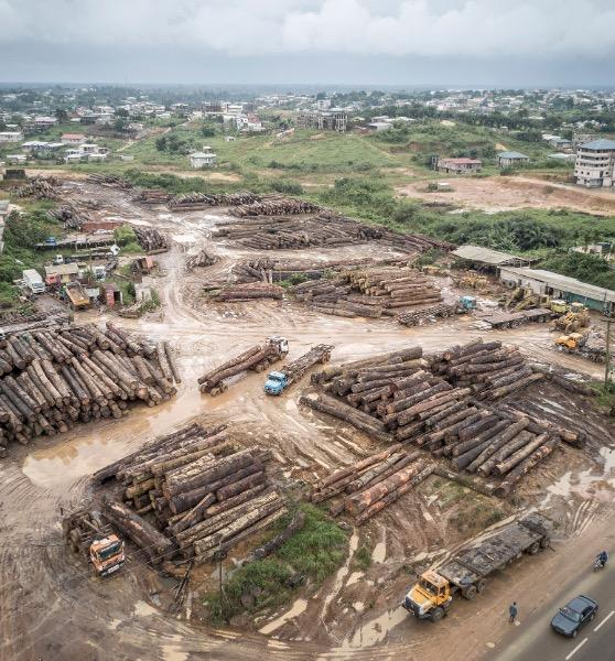 A timber stockpile outside of Douala, Cameroon © A. Walmsley / TRAFFIC