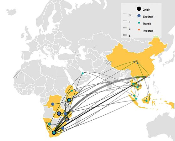 Advances in data mapping and analytics provide invaluable insights into emerging trade trends. This graphic shows illicit trade routes for rhino horn captured from seizures between 2016–2017 © TRAFFIC
