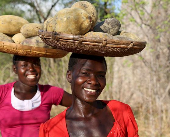 Baobab fruit harvesters in Zimbabwe © B'AYoba