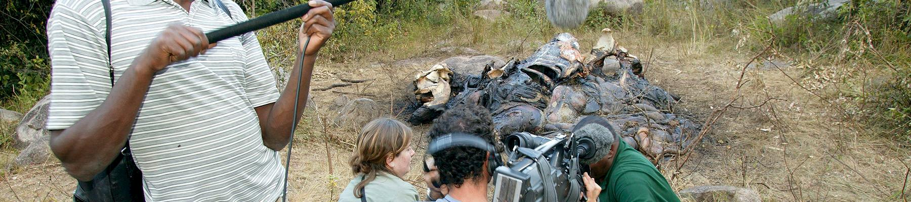 Filming a dead bull elephant in Kenya after it was speared to death by local villagers © Martin Harvey / WWF