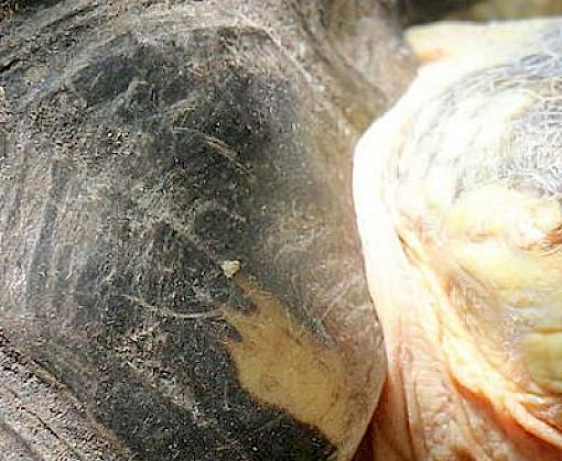 Pet freshwater turtle and tortoise trade in Chatuchak Market, Bangkok, Thailand