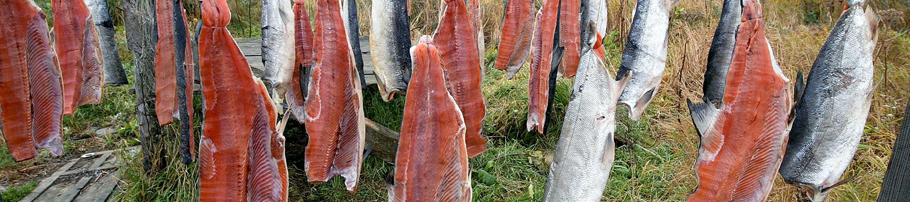 Salmons hanged for drying in the Russian Federation © Vladimir Filonov / WWF