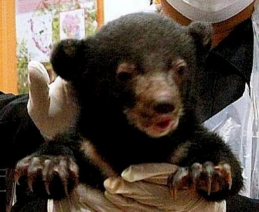 No let up in Asia's bear trade