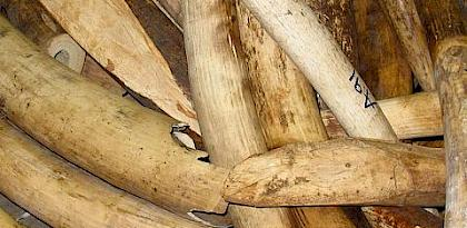 Timely significant ivory seizure in Viet Nam