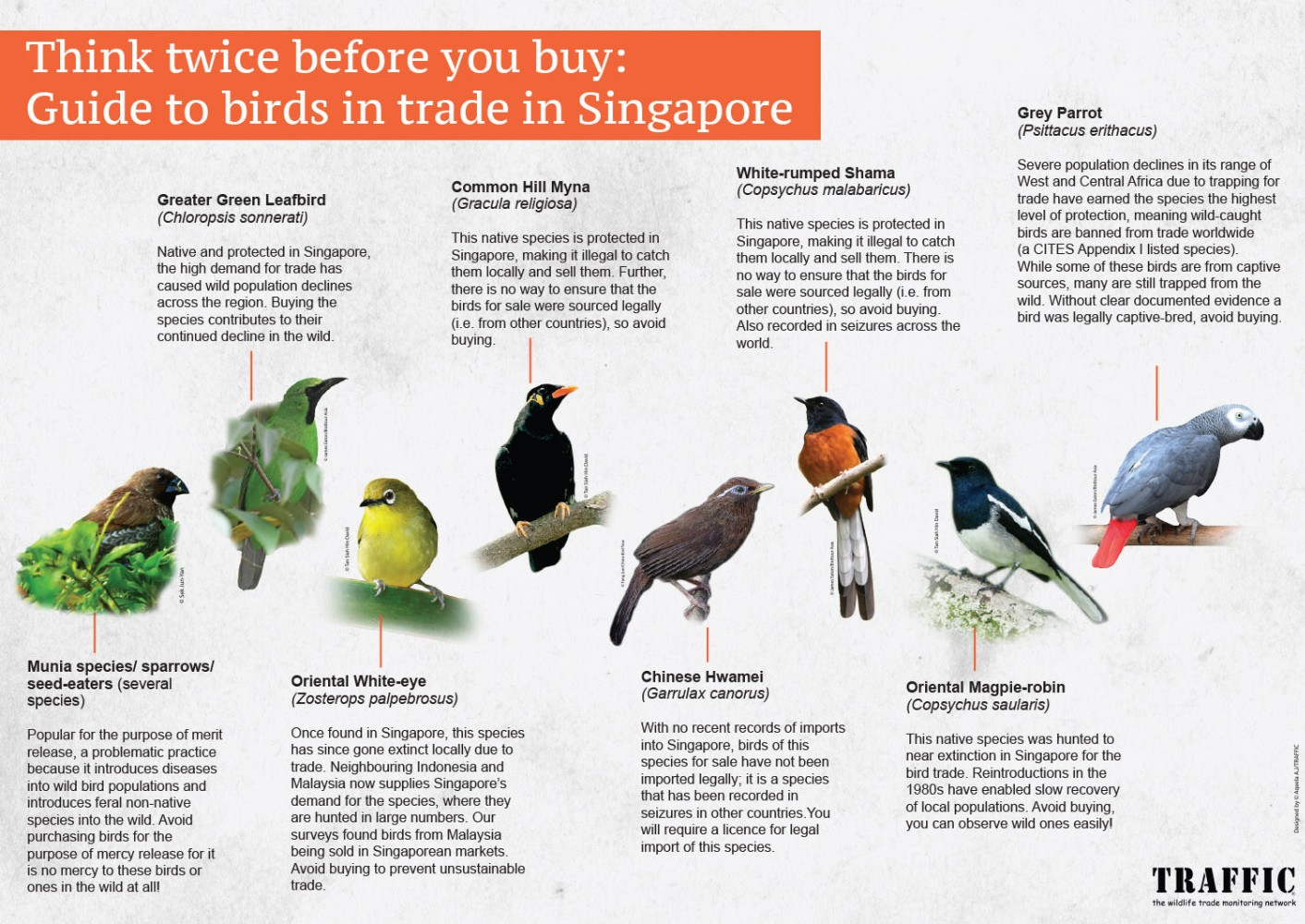 A poster aimed at potential buyers of birds in Singapore, advising which species are best avoided
