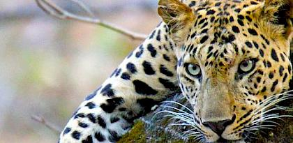 Illuminating the Blind Spot: A study on illegal trade in Leopard parts in India
