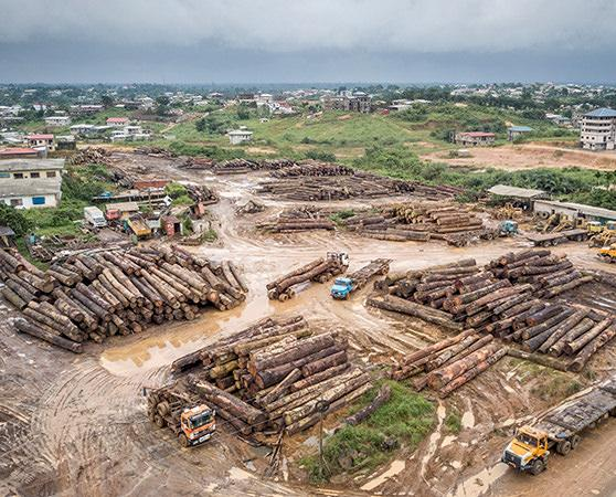 One of several logging dumps along the road to Douala, Cameroon, on the way to the port © A. Walmsley / TRAFFIC