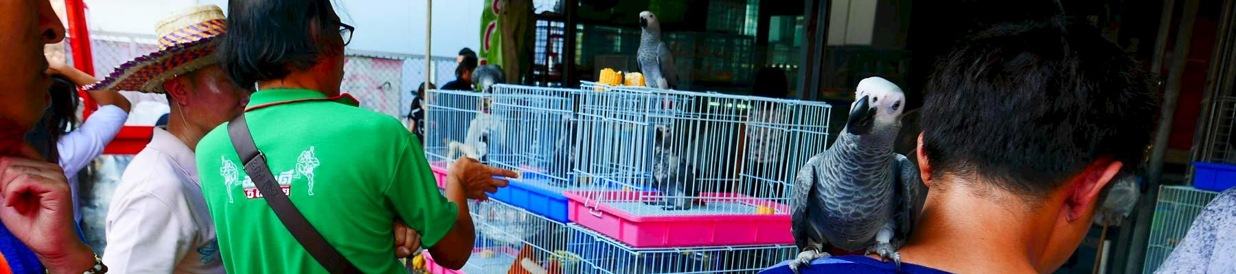 Visitors inspect birds for sale - many wild-sourced - at Chatuchak market, Thailand © TRAFFIC