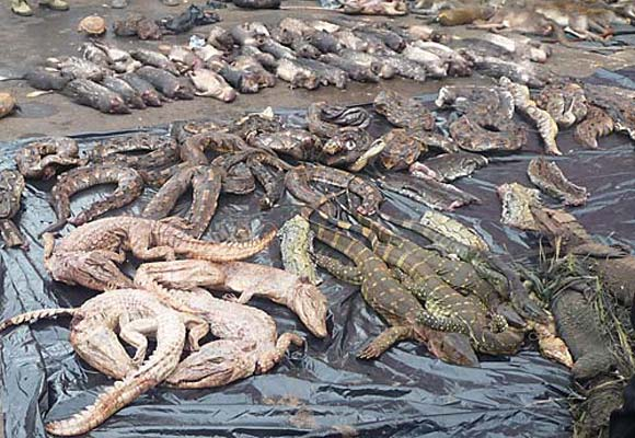 awareness raising targets commercial wildmeat sector in cameroon