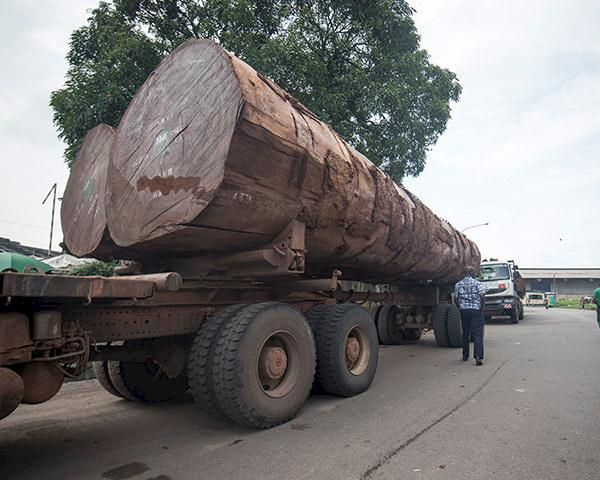 Trucks carrying timber wait to offload at Douala port, Cameroon © A. Walmsley / TRAFFIC