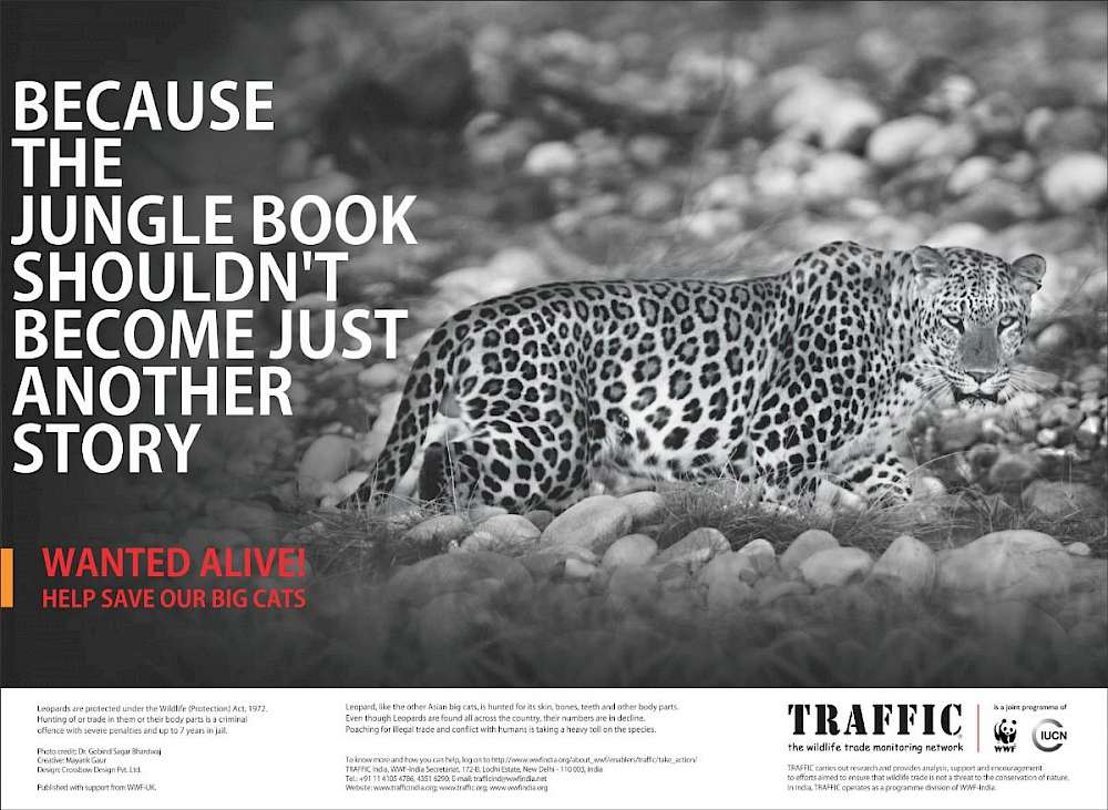 WANTED ALIVE': Help save our big cats - Wildlife Trade News